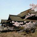 清水寺のご本堂の屋根が新しくなりました 平成の大修理